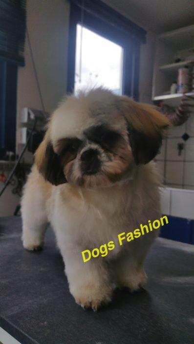 Dogs Fashion Trimsalon Rijsenhout