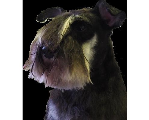 Honden trimsalon Dogs Fashion Rijsenhout