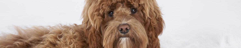 Doodle verzorgingspakket Dogs Fashion Rijsenhout